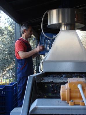 収穫したオリーブを洗う