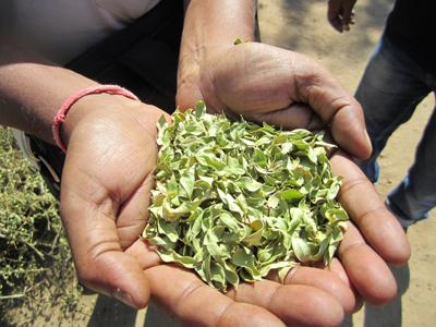 ヘナ乾燥葉