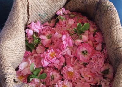 2015年の薔薇